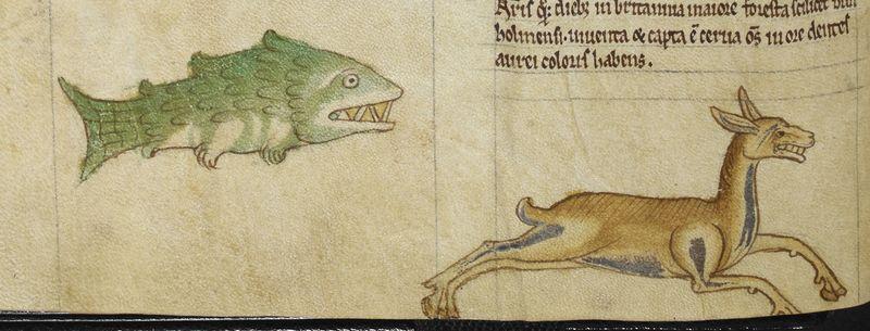 Рыба и олень с золотыми зубами