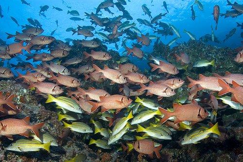 Рыбы, остров Кокос